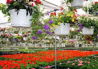 Greenhouses filled with flowers.